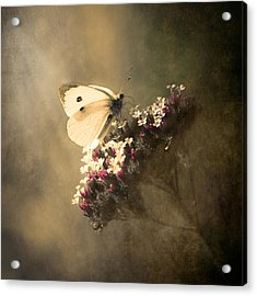 Butterfly Spirit #01 Acrylic Print by Loriental Photography