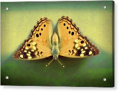 Butterfly Acrylic Print by Tony Grider