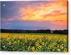 Buttonwood Sunset Acrylic Print by Bryan Bzdula