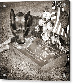 Buy A Print. Show Your Support For Reading K9 Police.  Willow Street Pictures.  Acrylic Print by Darren Modricker
