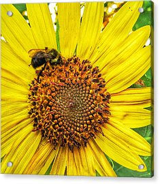 Buzz Word-sunflower Acrylic Print by Jame Hayes