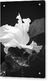 Bw Hibiscus Acrylic Print by Bonita Hensley