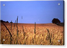 By The Highway 2 Acrylic Print by Lyle Crump