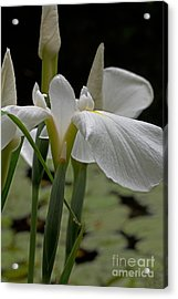 By The Pond Acrylic Print by Robert Pilkington