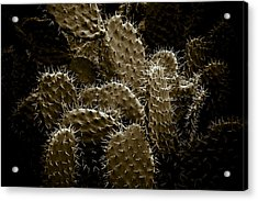 Cactaceae Acrylic Print by Frank Tschakert
