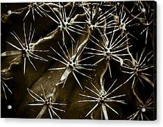 Cactus Acrylic Print by Frank Tschakert