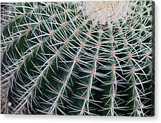 Cactus Landscape Edition Acrylic Print by Tony Grider