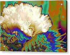 Cactus Moon Flower Acrylic Print by  Andrea Lazar