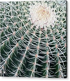 Cactus Square Edition Acrylic Print by Tony Grider