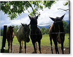 Cades Friends Acrylic Print by Laurie Perry