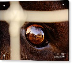 Caged Buffalo Reflects Acrylic Print by Robert Frederick