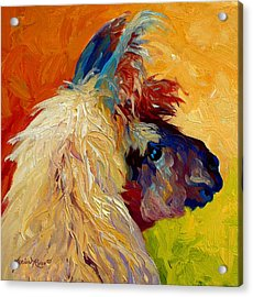 Calico Llama Acrylic Print by Marion Rose