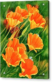 California Poppies Faces Up Acrylic Print by Sharon Freeman