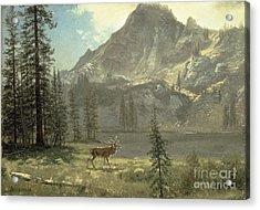 Call Of The Wild Acrylic Print by Albert Bierstadt