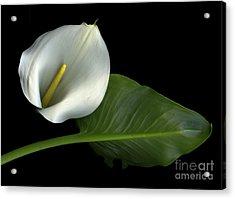 Calla Lily Acrylic Print by Christian Slanec