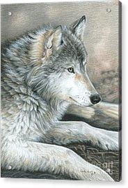 Calm Wolf Acrylic Print by Carla Kurt