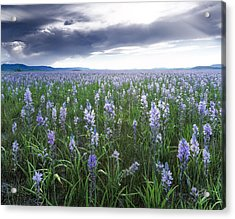 Camas Marsh 2 Acrylic Print by Leland D Howard