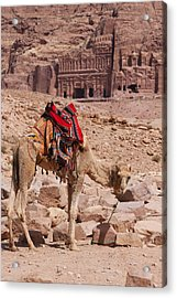 Camel In Front Of The Royal Tombs In Petra Acrylic Print by Martin Child