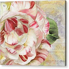 Camellia Acrylic Print by Mindy Sommers