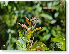 Camouflaged Butterfly Garden Art Acrylic Print by Robyn King