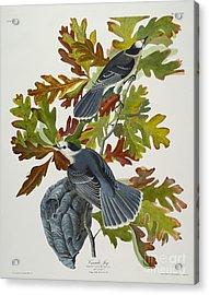 Canada Jay Acrylic Print by John James Audubon