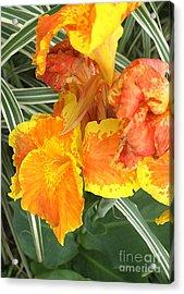 Canna Lilies Acrylic Print by David Bearden