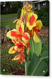 Canna Lily 2 Acrylic Print by Warren Thompson