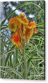 Canna Lily Acrylic Print by David Bearden