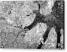 Canopy Of Autumn Leaves In Black And White Acrylic Print by Tom Mc Nemar