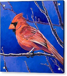 Cardinal Acrylic Print by Bob Coonts