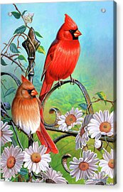 Cardinal Day 3 Acrylic Print by JQ Licensing