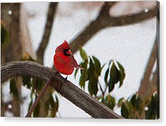 Cardinal In Winter Acrylic Print by Jeff Folger