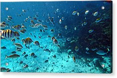 Caribbean Blue_1 Acrylic Print by Wendy White