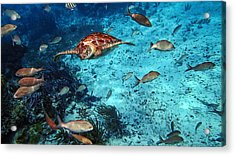 Caribbean Blue_10 Acrylic Print by Wendy White