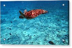 Caribbean Blue_11 Acrylic Print by Wendy White