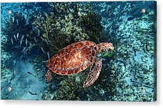 Caribbean Blue_15 Acrylic Print by Wendy White