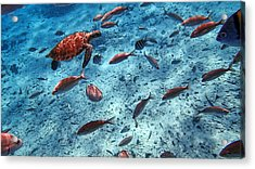 Caribbean Blue_3 Acrylic Print by Wendy White