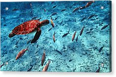 Caribbean Blue_4 Acrylic Print by Wendy White