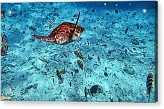 Caribbean Blue_6 Acrylic Print by Wendy White