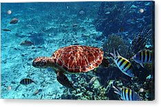 Caribbean Blue_8 Acrylic Print by Wendy White