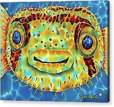 Caribbean Puffer Fish Acrylic Print by Daniel Jean-Baptiste