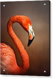 Caribean Flamingo Portrait Acrylic Print by Johan Swanepoel