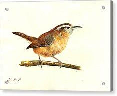 Carolina Wren Watercolor Painting Acrylic Print by Juan  Bosco