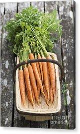 Carrots Acrylic Print by Tim Gainey