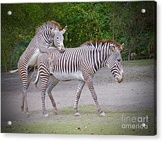 Carry Me Mom Acrylic Print by Judy Kay