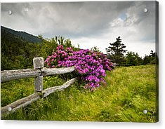 Carvers Gap Roan Mountain State Park Highlands Tn Nc Acrylic Print by Dave Allen