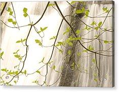 Cascade Falls Rushes Down  Cascade Acrylic Print by Phil Schermeister