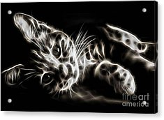 Cat Collection Acrylic Print by Marvin Blaine