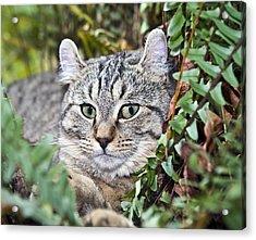 Cat In A Fern Acrylic Print by Susan Leggett