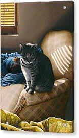 Cat In Shadows Acrylic Print by Carol Wilson